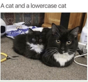 Lowercase: A cat and a lowercase cat