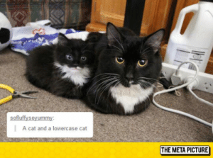 lolzandtrollz:  Lowercase Companion: A cat and a lowercase cat  THE META PICTURE lolzandtrollz:  Lowercase Companion