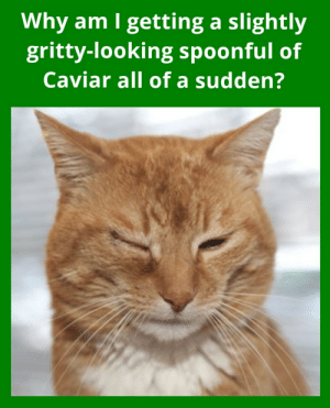 A cat loving Mary Poppins could tell you.: A cat loving Mary Poppins could tell you.