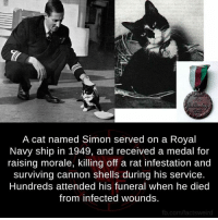 Cats, Dank, and fb.com: A cat named Simon served on a Royal  Navy ship in 1949, and received a medal for  raising morale, killing off a rat infestation and  surviving Cannon shells during his service.  Hundreds attended his funeral when he died  from infected wounds.  fb.com/factsweird