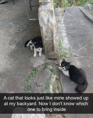 Funny, Cat, and Mine: A cat that looks just like mine showed up  at my backyard. Now I don't know which  one to bring inside And now? via /r/funny https://ift.tt/2zXbc9Q