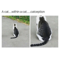 Memes, 🤖, and Cat: A cat....within a cat....catception