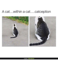 Cat,  a Cat, and Catception: A cat....within a cat....catception  Jupiler | Memedroid Catception
