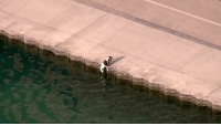 All Lives Matter, Chicago, and Memes: A Chicago police officer was at the right place at the right time when a dog fell into Lake Michigan. Watch the incredible rescue. police cop cops thinblueline lawenforcement policelivesmatter supportourtroops BlueLivesMatter AllLivesMatter brotherinblue bluefamily tbl thinbluelinefamily sheriff policeofficer backtheblue