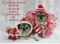Hi friends! Right??!! We love to enjoy every morsel of our holiday food... and if we overdue it just a bit.. well there's always our yoga pants, lol!!!  Check out this holiday card and many others of our laugh-out-loud cards from Gretta's Girls by Pugs and Kisses at www.grettasgirls.com and enjoy FREE SHIPPING on orders $40.00 and over and help pugs in need!!!!! Use code FREESHIPFUN  Love and thanks always! Maddie Kathryn and Zoe Elizabeth  PS Don't know about you but we're feeling grateful to still fit into our clothes after our Thanksgiving feast! Let's not even think about the month ahead!!!  P.S.S. We have SO much fun happening at our shop! Shop today and your order ships for FREE if it's over $40!! AND you are entered to win an awesome gift pack and our GRAND PRIZE 16x20 Gallery Wrap Fine Art Print! It is a GORGEOUS limited edition Gretta's Girls canvas wrap print is worth $199.00! YAY!! GIVEAWAY RULES: 1) Winner will be drawn randomly from orders placed Nov 25-28 2016 2) The winner will be announced on Tuesday Nov 29th (by 3pm EST). 3) The winner will be announced in a Facebook post and in the comments of this post. The winner will be private messaged by one of our humans. 4) If we do not hear from the winner after two messages and within one week of the first message, the prize will go to a runner-up winner. Pugs and Kisses accepts all responsibility for carrying out this giveaway as outlined above. Facebook is in no way involved in or liable for the giveaway. Best of luck and many thanks to everybody!!!: A Christmas miracle  would be..  still fitting  into our  Clothes after  the  holidays! Hi friends! Right??!! We love to enjoy every morsel of our holiday food... and if we overdue it just a bit.. well there's always our yoga pants, lol!!!  Check out this holiday card and many others of our laugh-out-loud cards from Gretta's Girls by Pugs and Kisses at www.grettasgirls.com and enjoy FREE SHIPPING on orders $40.00 and over and help pugs in need!!!!! Use code FREESHIPFUN  Love and thanks always! Maddie Kathryn and Zoe Elizabeth  PS Don't know about you but we're feeling grateful to still fit into our clothes after our Thanksgiving feast! Let's not even think about the month ahead!!!  P.S.S. We have SO much fun happening at our shop! Shop today and your order ships for FREE if it's over $40!! AND you are entered to win an awesome gift pack and our GRAND PRIZE 16x20 Gallery Wrap Fine Art Print! It is a GORGEOUS limited edition Gretta's Girls canvas wrap print is worth $199.00! YAY!! GIVEAWAY RULES: 1) Winner will be drawn randomly from orders placed Nov 25-28 2016 2) The winner will be announced on Tuesday Nov 29th (by 3pm EST). 3) The winner will be announced in a Facebook post and in the comments of this post. The winner will be private messaged by one of our humans. 4) If we do not hear from the winner after two messages and within one week of the first message, the prize will go to a runner-up winner. Pugs and Kisses accepts all responsibility for carrying out this giveaway as outlined above. Facebook is in no way involved in or liable for the giveaway. Best of luck and many thanks to everybody!!!