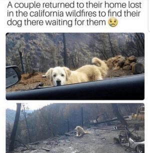 Enough to make a grown man cry: A couple returned to their home lost  in the california wildfires to find their  dog there waiting for them Enough to make a grown man cry