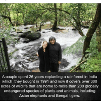 Animals, Asian, and Bailey Jay: A couple spent 26 years replanting a rainforest in India  which they bought in 1991 and now it covers over 300  acres of wildlife that are home to more than 200 globally  endangered species of plants and animals, including  Asian elephants and Bengal tigers. Love this