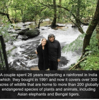 Via @house.of.leaders 😊 - Thank you for doing something great for the world. Tons of love and light 🙏❤️ awakespiritual goodvibes: A couple spent 26 years replanting a rainforest in India  which they bought in 1991 and now it covers over 300  cres of wildlife that are home to more than 200 globally  endangered species of plants and animals, including  Asian elephants and Bengal tigers. Via @house.of.leaders 😊 - Thank you for doing something great for the world. Tons of love and light 🙏❤️ awakespiritual goodvibes