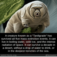 """Drinking, Facts, and Memes: A creature known as a """"Tardigrade"""" has  survived all five mass extinction events. It can  live in boiling water, solid ice, and the intense  radiation of space. It can survive a decade in  a desert, without a drop of water to drink, or  in the deepest trenches of the sea.  weird-facts.org  @factsweird"""