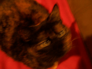 A cursed image of my cat. There's no filters or anything, I was just using a 2006 camera, and when she moved it glitched out.: A cursed image of my cat. There's no filters or anything, I was just using a 2006 camera, and when she moved it glitched out.