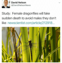 🤓🤓🤓 I just found out I'm mixed with Dragonfly exotic shepost♻♻: a David Nelson  @David NelsonNews  Study: Female dragonflies will fake  sudden death toavoid males they don't  like  newscientist.com/article/212918... 🤓🤓🤓 I just found out I'm mixed with Dragonfly exotic shepost♻♻