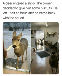 "Deer, Friends, and Squad: A deer entered a shop. The owner  decided to give him some biscuits. He  left...half an hour later he came back  with the squad <p>Looking out for your friends via /r/wholesomememes <a href=""http://ift.tt/2BHKtgC"">http://ift.tt/2BHKtgC</a></p>"