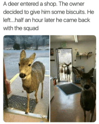 Deer, Squad, and Back: A deer entered a shop. The owner  decided to give him some biscuits. He  left...half an hour later he came back  with the squad One smart deer