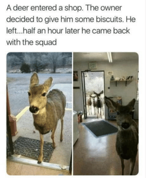 Deer, Love, and Squad: A deer entered a shop. The owner  decided to give him some biscuits. He  left...half an hour later he came back  with the squad Seen before, but love this