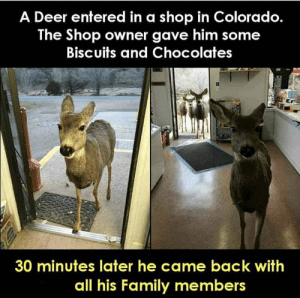 https://t.co/53y3iY1rzH: A Deer entered in a shop in Colorado.  The Shop owner gave him some  Biscuits and Chocolates  30 minutes later he came back with  all his Family members https://t.co/53y3iY1rzH