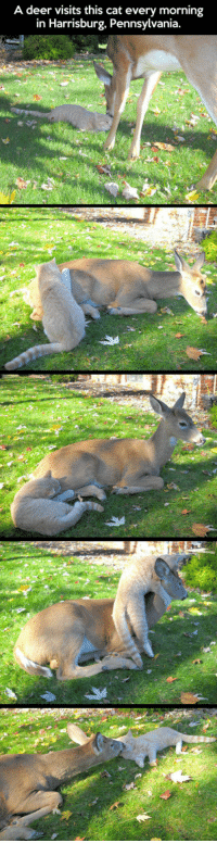 Deer, Quite, and Pennsylvania: A deer visits this cat every morning  in Harrisburg, Pennsylvania. <p>Quite The Unexpected Friendship</p>