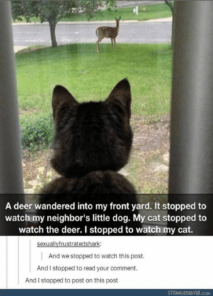 20+ Funny Tumblr Posts To Fill In Your Tumblr Reading Time (Episode #209): A deer wandered into my front yard. It stopped to  watch my neighbor's little dog. My cat stopped to  watch the deer. I stopped to watch my cat.  sexuallyfrustratedshark  And we stopped to watch this post.  And I stopped to read your comment.  And I stopped to post on this post  STRANGEBEAVER.com 20+ Funny Tumblr Posts To Fill In Your Tumblr Reading Time (Episode #209)