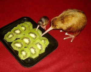 Desperate, Family, and Chinese: A desperate family turns to cannibalism at the height of the great Chinese famine (1960 colorised)