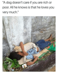 "Dog, Friend, and Via: ""A dog doesn't care if you are rich or  poor. All he knows is that he loves you  verv much. You will always have a friend via /r/wholesomememes https://ift.tt/2EgiOYu"