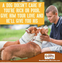 mercola: A DOG DOESNT CARE IF  YOU'RE RICH OR POOR  GIVE HIM YOUR LOVE AND  HELL GIVE YOU HIS  Healthy  Presentedby Mercola  Healthy Pets Mercola.com  oistock com/Y