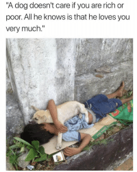 "Memes, 🤖, and Dog: A dog doesn't care it you are rich or  poor. All he knows is that he loves you  very much."" https://t.co/WAFsoip53P"