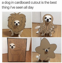Funny, Lmao, and Best: a dog in cardboard cutout is the best  thing i've seen all day Lmao 😂
