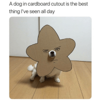 Funniest thing I've seen all day | @cuteandfuzzybunch: A dog in cardboard cutout is the best  thing l've seen all day Funniest thing I've seen all day | @cuteandfuzzybunch