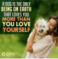 mercola: A DOG IS THE ONLY  BEING ON EARTH  THAT LOVES YOU  MORE THAN  YOU LOVE  YOURSELF  Healthy  Healthy Pets Mercola.com