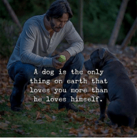 Memes, Music, and Earth: A dog is the only  thing on earth that  loves you more than  he loves himself. ❤️. . . . . . . music mindfulness empowerment spiritualawakening consciousness higherself selfdevelopment universe thesecret lawofattraction successmindset nlppractitioner vibratehigher 1111 loveyourself focus thoughtprocess foodforthought quotestoliveby relationshipquotes mindset goodvibesonly amen quotesaboutlife spiritualdevelopment selflove dharma ascension