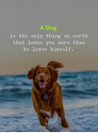Earth, Dog, and Thing: A Dog  is the only thing on earth  that Loves you more than  he loves himself