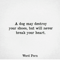 Hearts Word: A dog may destroy  your shoes, but will never  break your heart  Word Porn