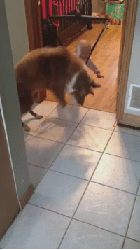 Girl Memes, Teaching, and Baby: A dog teaching a baby to jump https://t.co/QQUyrSWwaa