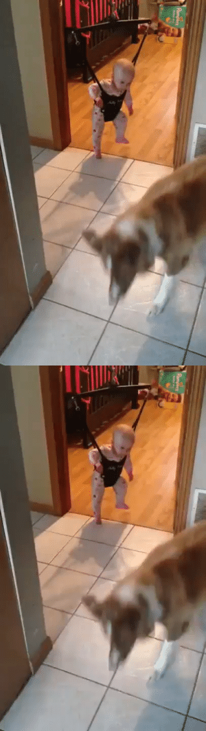 A dog teaching a baby to jump https://t.co/U2lIlO9K86: A dog teaching a baby to jump https://t.co/U2lIlO9K86