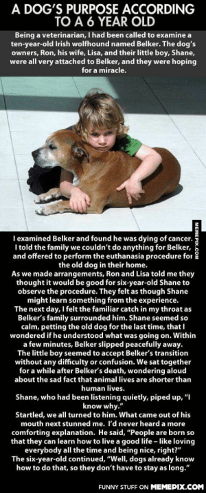 """Why must you hurt me like thisomg-humor.tumblr.com: A DOG'S PURPOSE ACCORDING  TO A 6 YEAR OLD  Being a veterinarian, I had been called to examine a  ten-year-old Irish wolfhound named Belker. The dog's  owners, Ron, his wife, Lisa, and their little boy, Shane,  were all very attached to Belker, and they were hoping  for a miracle.  I examined Belker and found he was dying of cancer.  I told the family we couldn't do anything for Belker,  and offered to perform the euthanasia procedure for  the old dog in their home.  As we made arrangements, Ron and Lisa told me they  thought it would be good for six-year-old Shane to  observe the procedure. They felt as though Shane  might learn something from the experience.  The next day, I felt the familiar catch in my throat as  Belker's family surrounded him. Shane seemed so  calm, petting the old dog for the last time, that I  wondered if he understood what was going on. Within  a few minutes, Belker slipped peacefully away.  The little boy seemed to accept Belker's transition  without any difficulty or confusion. We sat together  for a while after Belker's death, wondering aloud  about the sad fact that animal lives are shorter than  human lives.  Shane, who had been listening quietly, piped up, """"I  know why.""""  Startled, we all turned to him. What came out of his  mouth next stunned me. I'd never heard a more  comforting explanation. He said, """"People are born so  that they can learn how to live a good life - like loving  everybody all the time and being nice, right?""""  The six-year-old continued, """"Well, dogs already know  how to do that, so they don't have to stay as long.""""  FUNNY STUFF ON MEMEPIX.COM  MEMEPIX.COM Why must you hurt me like thisomg-humor.tumblr.com"""