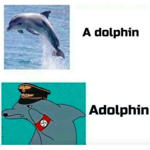 Dank, Memes, and Target: A dolphin  Adolphin HEIL FLIPPER!!!! by HateTiggers MORE MEMES
