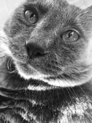 A dramatic picture of my cat courtesy of an iPhone filter lmao: A dramatic picture of my cat courtesy of an iPhone filter lmao
