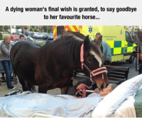 A dying woman's final wish is granted, to say goodbye  to her favourite horse... Saying Goodbye For The Very Last Time