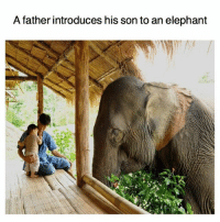 Beautiful, Memes, and Elephant: A father introduces his son to an elephant Such beautiful creatures 🤗🙊😌🐘 Consciousvibrancy