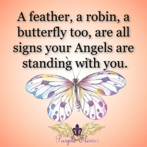 <3: A feather, a robin, a  butterfly too, are all  signs your Angels are  standing with you  THE  Purple 'Slower <3