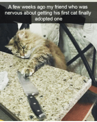 Friday cat humor. catcon: A few weeks ago my friend who was  nervous about getting his first cat finally  adopted one Friday cat humor. catcon