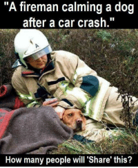 "Memes, 🤖, and Crash: ""A fireman calming a dog  after a car crash.""  How many people will Share this?"