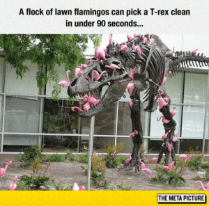 laughoutloud-club:  Fact About Flamingos: A flock of lawn flamingos can pick a T-rex clean  in under 90 seconds.  THE META PICTURE laughoutloud-club:  Fact About Flamingos