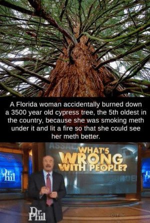 Florida, why? via /r/memes http://bit.ly/2WbQJKw: A Florida woman accidentally burned down  a 3500 year old cypress tree, the 5th oldest in  the country, because she was smoking meth  under it and lit a fire so that she could see  her meth better.  ASSACWHAT'S  WRONG  WITH PEOPLE?  RDE P  CTV Florida, why? via /r/memes http://bit.ly/2WbQJKw