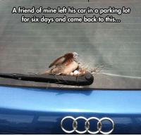 Love, Tumblr, and Audi: A friend ofmine left his car in a parking lot  or sixdays and came back fo fhis.o. srsfunny:Chicks Love An Audi