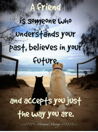 Memes, Mermaids, and Muse: A friend  someone who  Understands your  past, believes in you  future  and accepts you just  the way you are. Mermaid Musings <º))))><