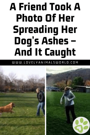 A Friend Took A Photo Of Her Spreading Her Dog's Ashes – And It Caught - Lovely Animals World #dogs #doglovers #puppy #puppies #animals #animallovers #lovelyanimalsworld: A Friend Took A  Photo Of Her  Spreading Her  Dog's Ashes -  And It Caught  .LOVELYANIMALSLU O R L D . COM A Friend Took A Photo Of Her Spreading Her Dog's Ashes – And It Caught - Lovely Animals World #dogs #doglovers #puppy #puppies #animals #animallovers #lovelyanimalsworld