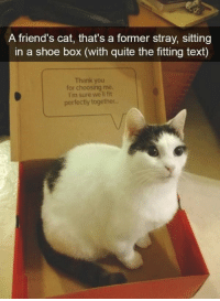 Cats, Friends, and Funny: A friend's cat, that's a former stray, sitting  in a shoe box (with quite the fitting text)  Thank you  for choosing me  I'm sure we ll fit  perfectly together. Wholesome Cat Snapchats Memes That Will Make You LOL (14 Pics) #funny #cats #snapchat #hilarious #humor #memes #pictures