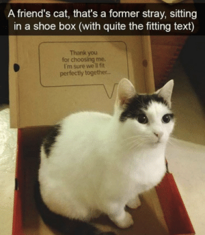 https://t.co/4tu09o7MYm: A friend's cat, that's a former stray, sitting  in a shoe box (with quite the fitting text)  Thank you  for choosing me.  I'm sure we lI fit  perfectly together.. https://t.co/4tu09o7MYm
