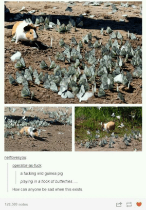 flock: a fucking wild guinea pig  playing in a flock of butterflies...  How can anyone be sad when this exists  128,580 notes