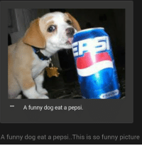 funny dog: A funny dog eat a pepsi.  A funny dog eat a pepsi..This is so funny picture